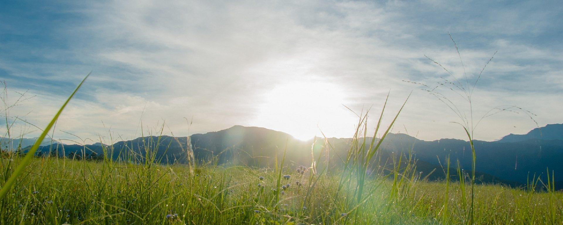 陽光灑落大草原